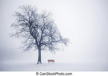 Winter tree in fog - Foggy winter scene with leafless tree...