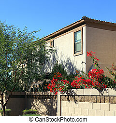 Arizona Housing in Phoenix - Crimson Red Bougainvillea over...