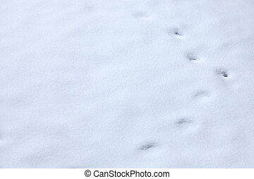 Animal tracks in snow - winter Animal tracks in snow