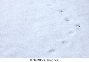 Animal tracks in snow - winter Animal tracks in snow