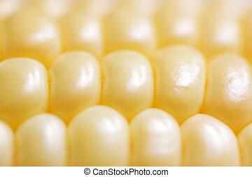 corncob - close up of corncob