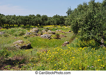 olive trees spring flowers old stone well - Olive trees,...