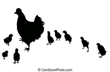 chicken and its chicks,vector