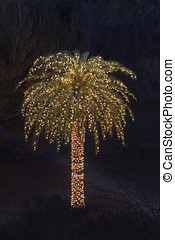 Palm Tree Decorated with Lights for Christmas