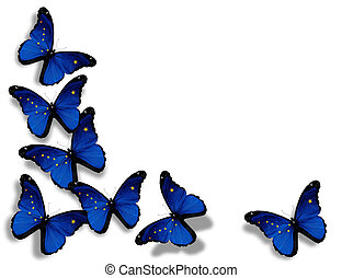 Alaska flag butterflies, isolated on white background