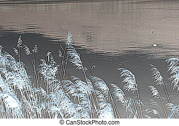 abstract vegetation on the lake