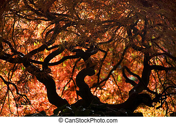 Japanese Maple Fall Van Dusen Garden Vancouver - Japanese...