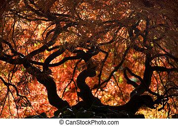 Japanese Maple Fall Van Dusen Garden Vancouver - Japanese...