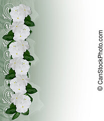 Flowers Border white Periwinkle - Image and Illustration...