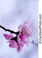 Spring blurry abstract nature background