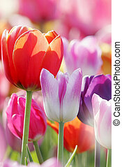 Beautiful spring flowers - Beautiful colorful spring flowers...
