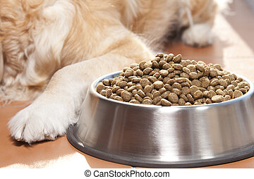 Dog with his food - Golden retriver close to his cavity of...