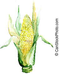 An ear of corn, watercolor illustration