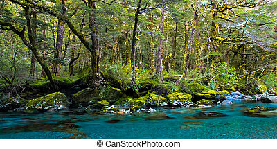 Forest and deep blue river, on routeburn track, mt. aspring...