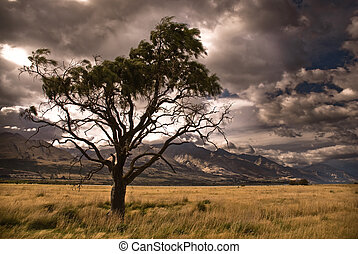 Half dead tree in stormy valley. Glenorchy, New Zealand.