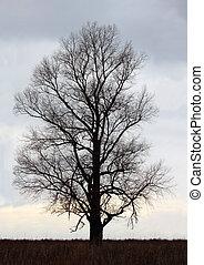 dead tree - dead dry tree