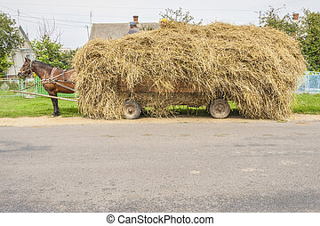 One brown horse transportation hay on wooden cart - Ukraine....