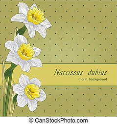 narcissus and polka don floral background, vector...