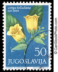Atropa belladonna - A stamp printed in Yugoslavia shows...