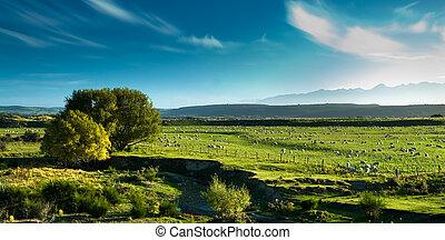 Panoramic view of rural scenery