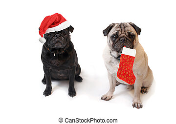 Christmas Pugs - Black and Fawn colored Pugs one with...