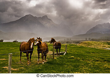 horses awaiting storm - Three horses awaiting an approaching...