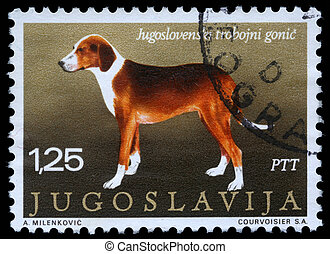 Serbian Tricolour Hound - A stamp printed in Yugoslavia...