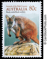 Brush-tailed Rock-wallaby - A stamp printed in Australia...