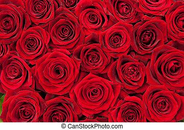vermelho, rosas