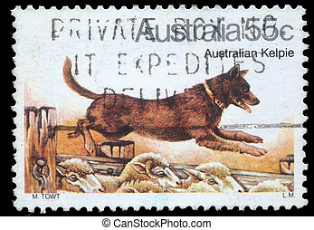 Australian Kelpie Dog - A stamp printed in Australia shows...