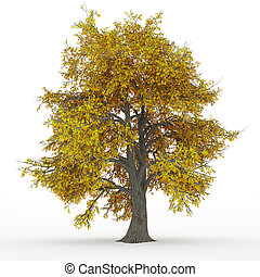 jesion, drzewo