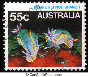Bennett%u2019s Nudibranch - A stamp printed in Australia...