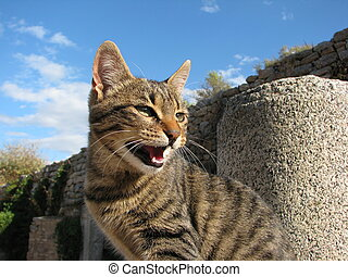 Spitting domestic cat (housecat) on a wall