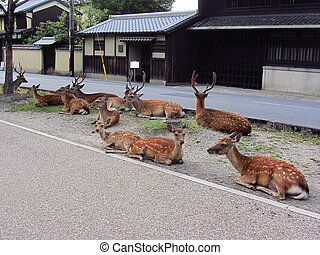 Protected deers on the streets of Nara, Japan...