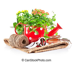 green plants in red watering can with garden tool - green...