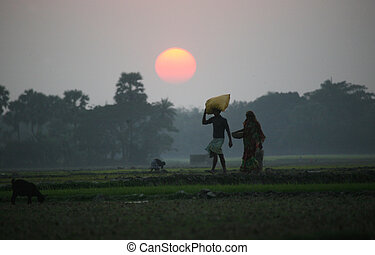 Villagers return home after a hard day on the rice fields,...