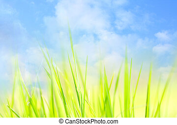 Spring sky background with green grass