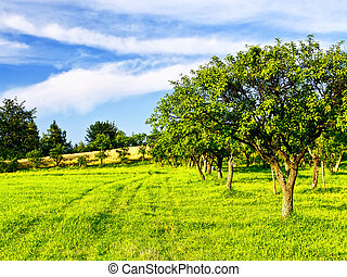 Beautiful spring orchard