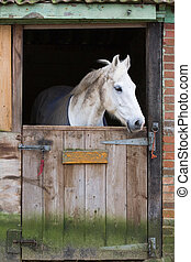 Horse in stable - White horse behind a wooden stable door