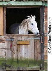 cavalo, estável