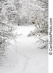 Snow covered woods - A gate and trees covered in snow in a...