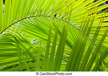 Jungle background - Palm frond details ideal for a jungle...