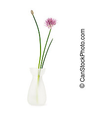 Chive flower in vase - Chives in a white vase isolated on a...