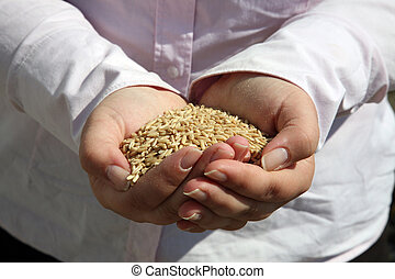 Wheat in womans hand