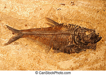Fossilized Fish - Fossilized fish on a sandstone background