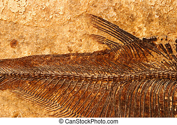 Fossil fish close-up - Close-up of a fossil fish on a...