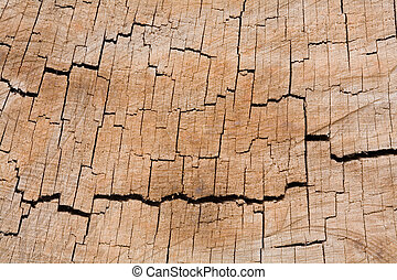 Tree ring texture - Tree rings in a closeup cross-section of...