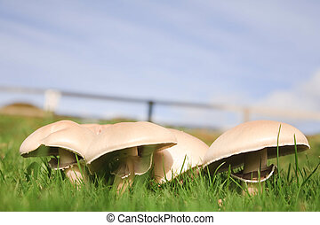 Field of mushrooms beneath a blue sky