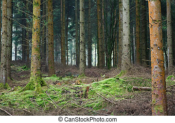 Forest clearing - Small clearing in a dense evergreen forest...