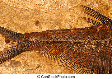 Fossil fish detail - Detail of a fossil fish on a textured...